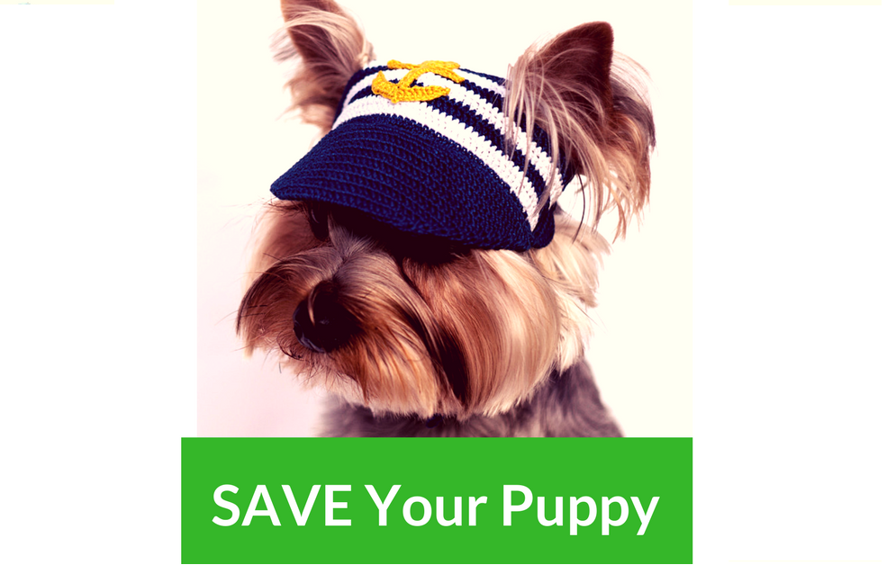 7 Awesome Hats You Must Have To Protect Your Puppy's Eyes