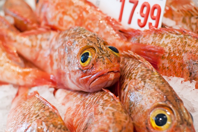 Top 15 contaminated fish you shouldn 39 t be eating save for Ocean perch fish